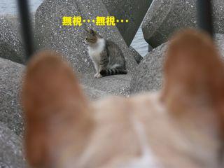 ネコヤン.jpg