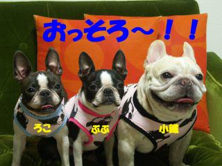 4のコピー.jpg